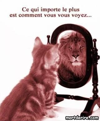 Photos image drole animaux singe